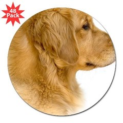 "Golden Retriever Portrait Oval 3"" Lapel Sticker (48 pk)"