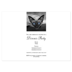 Siamese Cat B&W Photo Art 5x7 Flat Cards