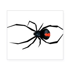 Redback Spider Beer Label