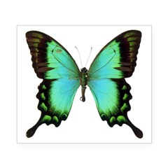 Green Butterfly Rectangle Beer Label