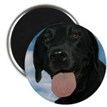 Jun Lab of the Month Magnet